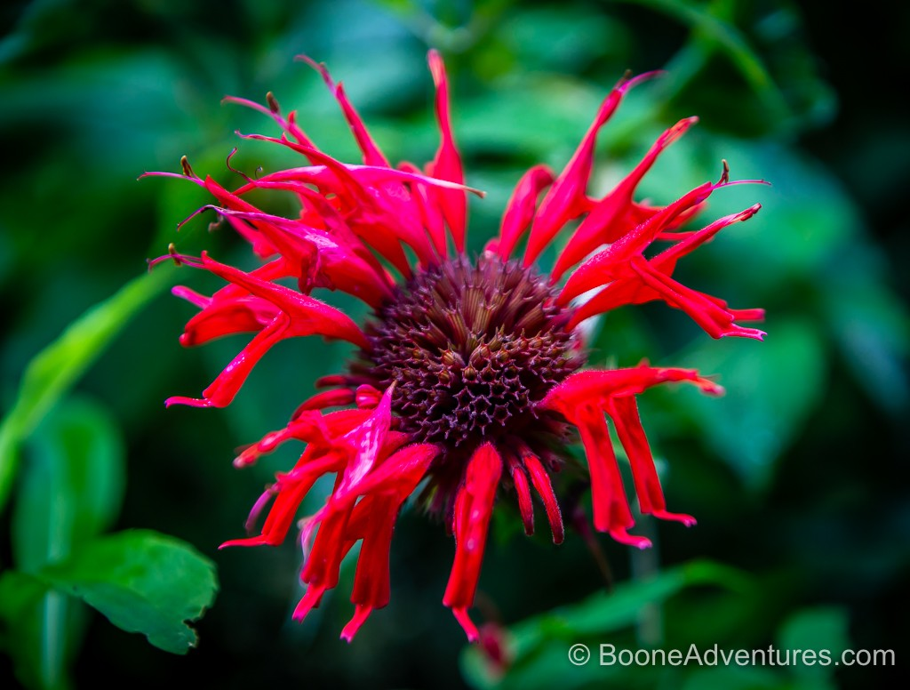 instagram-bee-balm