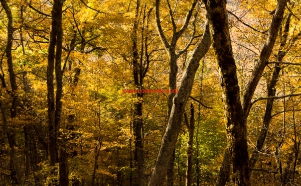 fall-leaves-feature